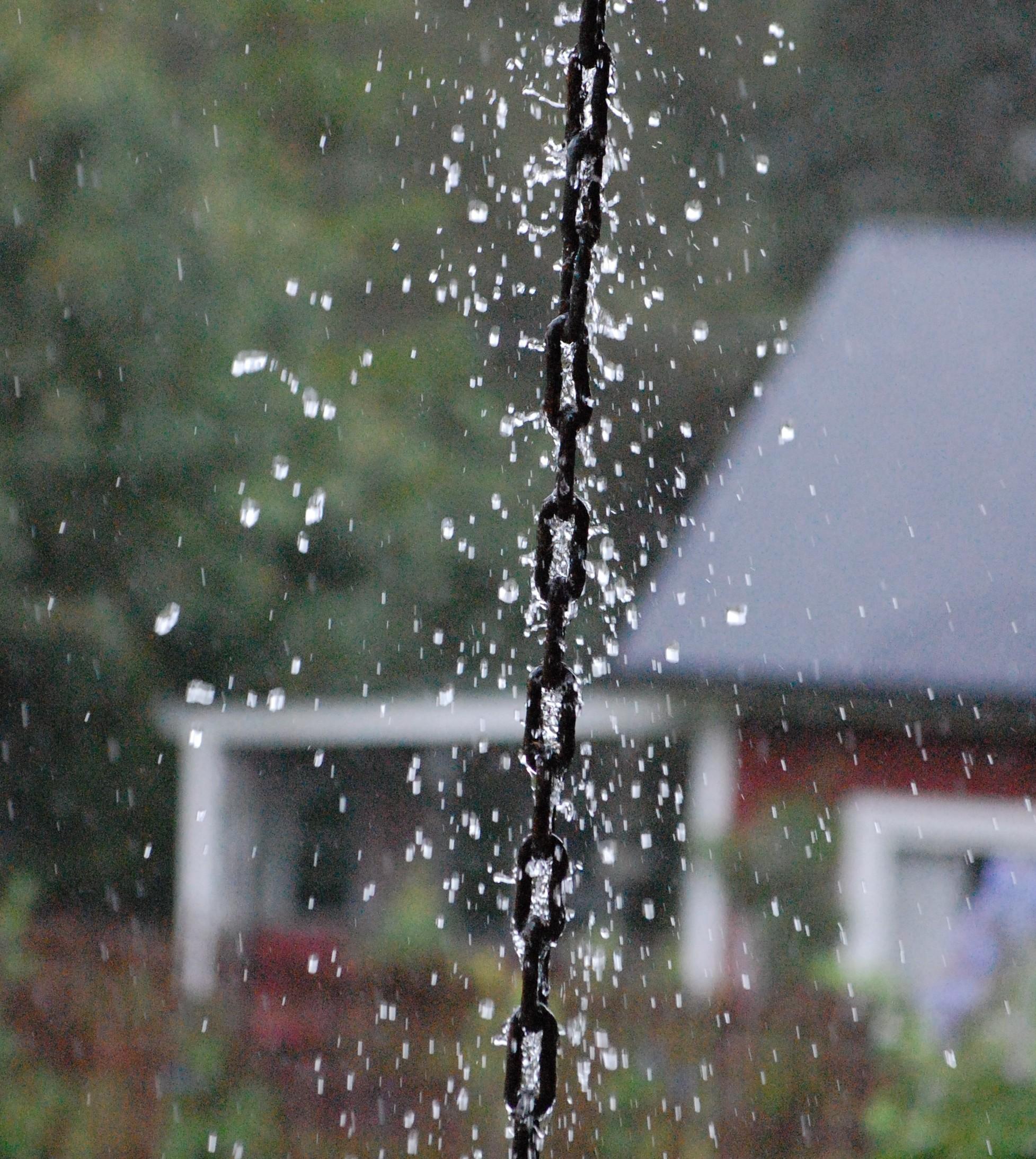 Följ min blogg om allt härligt grönt och skönt i trädgården och ...