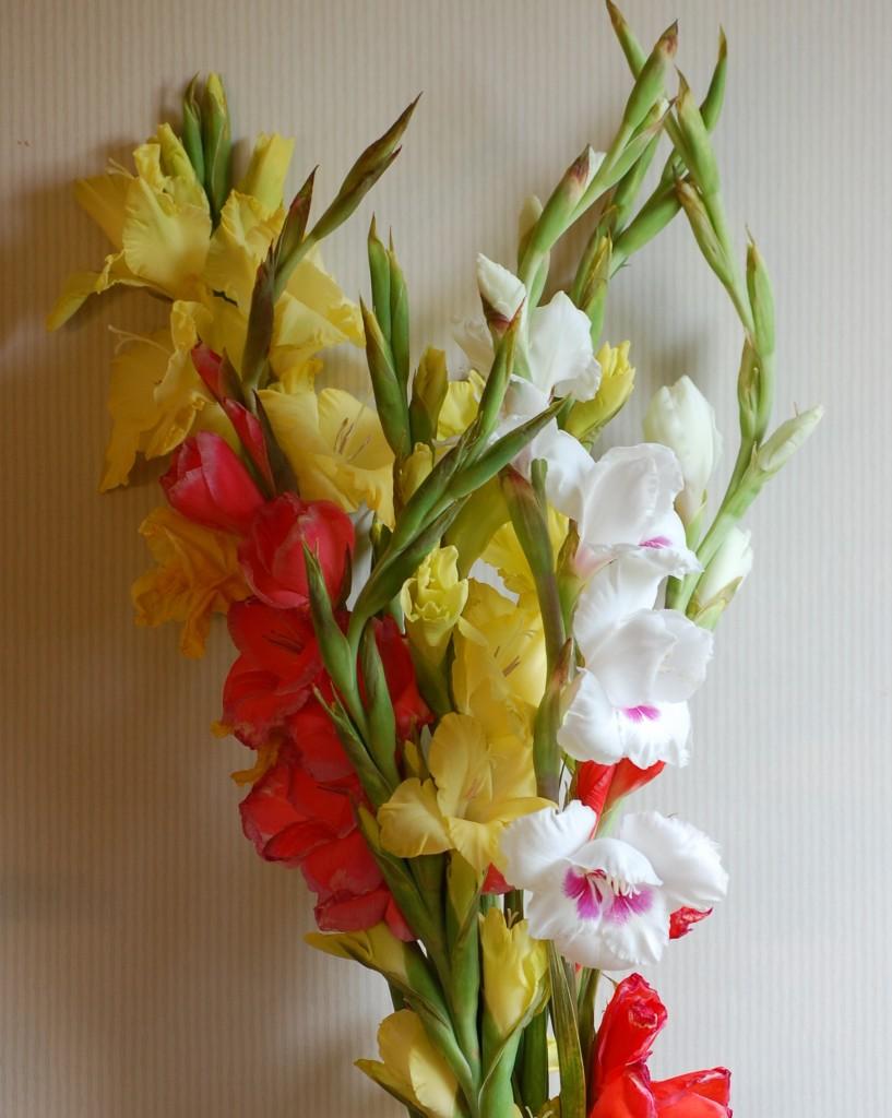 Höstens sista gladiolus