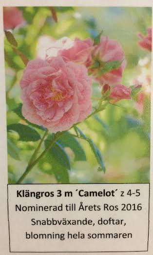 Camelot ros