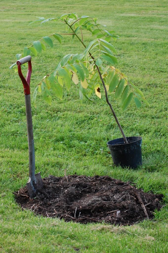 Visst är det kul att gräva och plantera. Hellre än att dammsuga!
