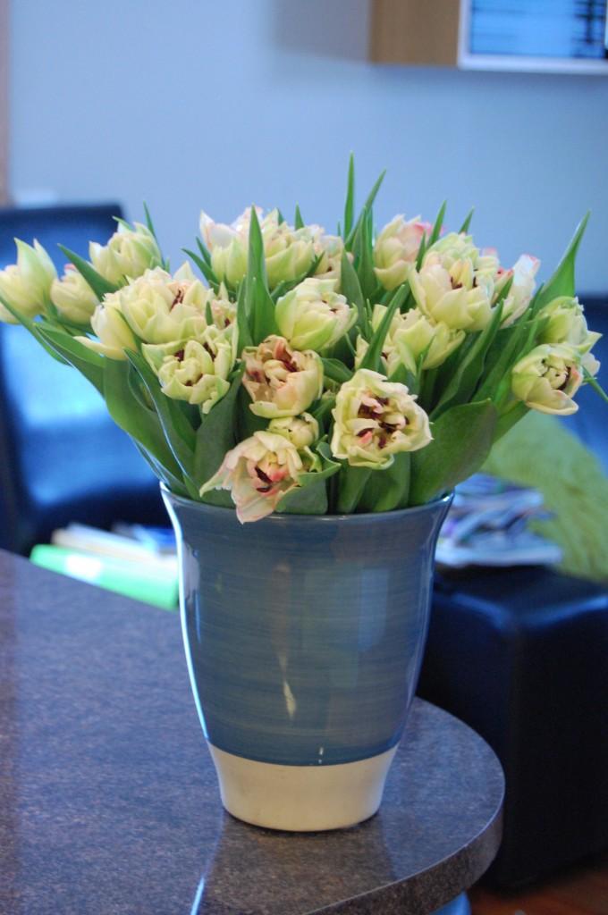 Dubbla tulpaner i vitt rosagrönt (1)