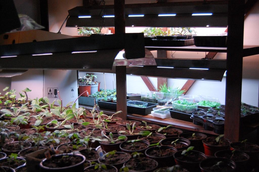 Min växtbelysning i källarn