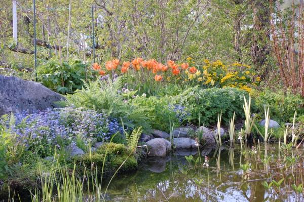 R. Vårblommor vid dammen