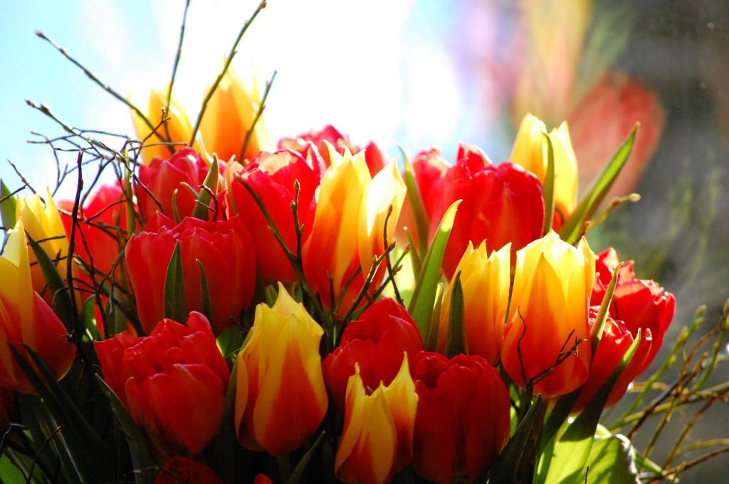 Tulpanbukett i gult och rött (1)