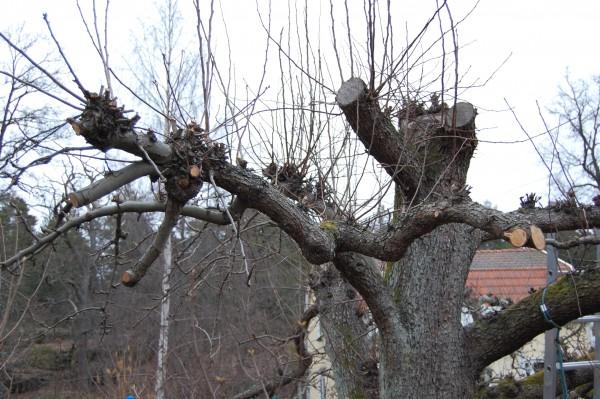 Stympat träd