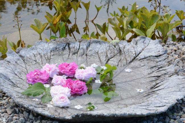 Gammaldags rosor på betongfat av rabarberblad