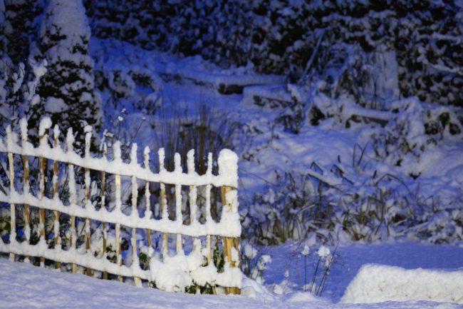 Kastanjestaket i vinterskrud