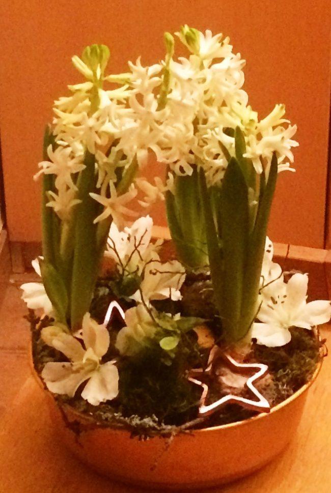 Hyacinter i bakfrom
