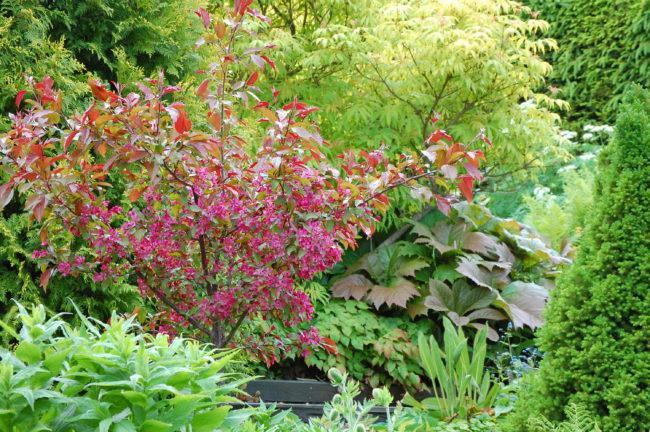 Planera för en frodig frisk trädgård