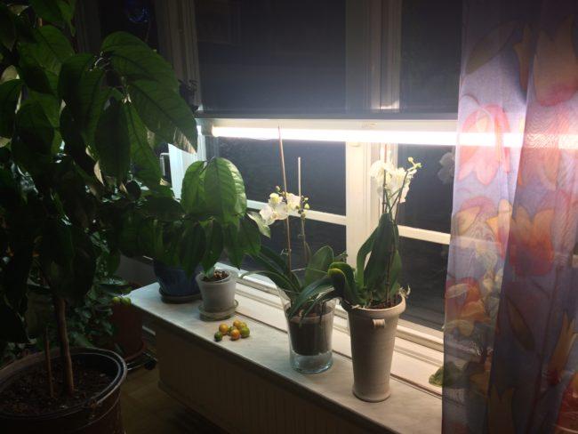 växtbelysning med lysrör
