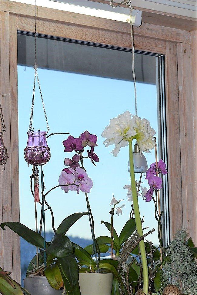 Orkidéfönster med belysning